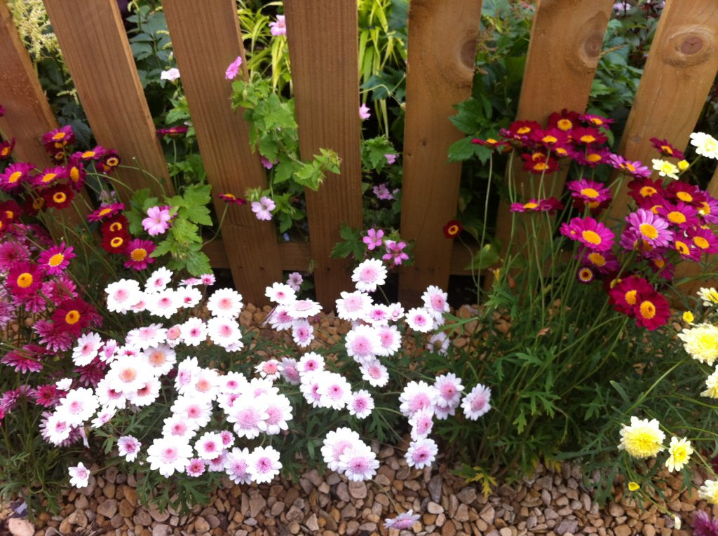 Spring flowers growing along a fence - could a creative coach help to grow your business?